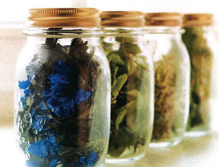 染料となる植物